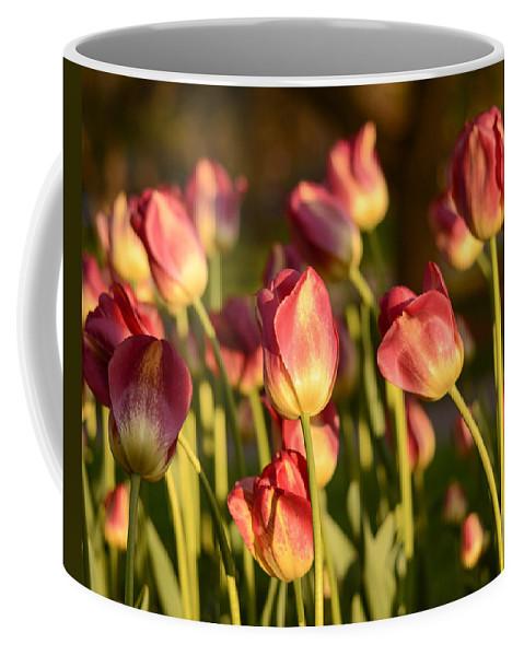 Tulip Print Coffee Mug featuring the photograph Tulips In Public Garden by Nicole Freedman