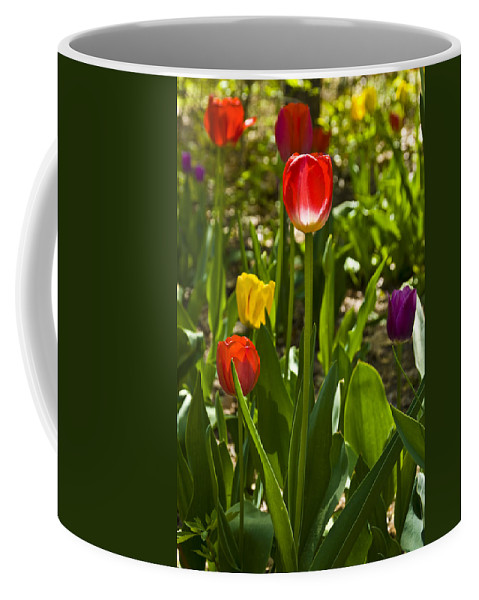 Spring Coffee Mug featuring the photograph Tulips In The Garden by Anthony Sacco