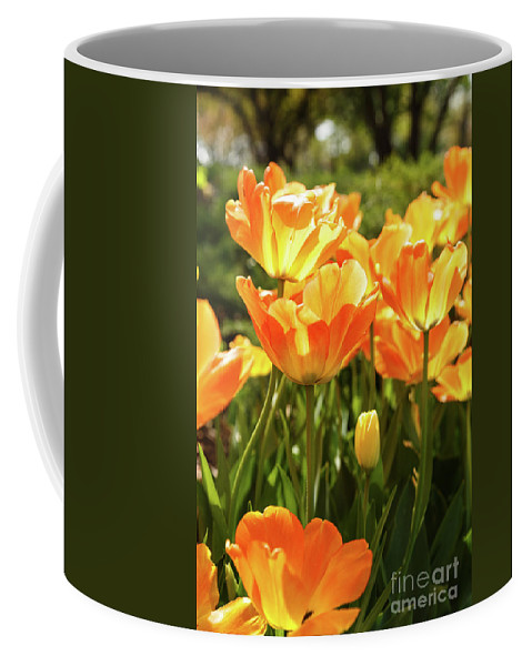 Tulips Coffee Mug featuring the photograph Tulips In The Sunlight by Terri Morris