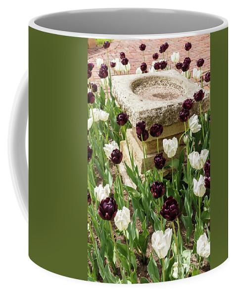 Tulip Coffee Mug featuring the photograph Tulips Surround The Bird Bath by Terri Morris
