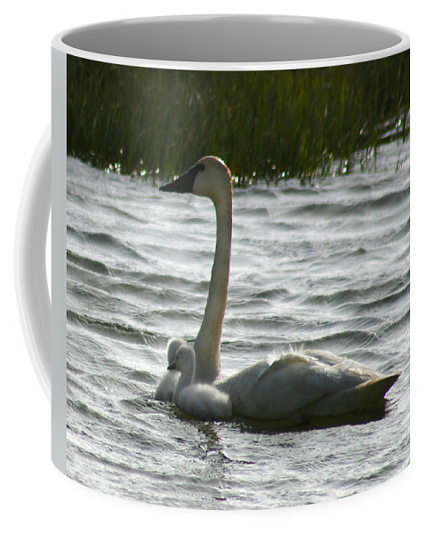 Swans Coffee Mug featuring the photograph Tundra Swan And Signets by Anthony Jones