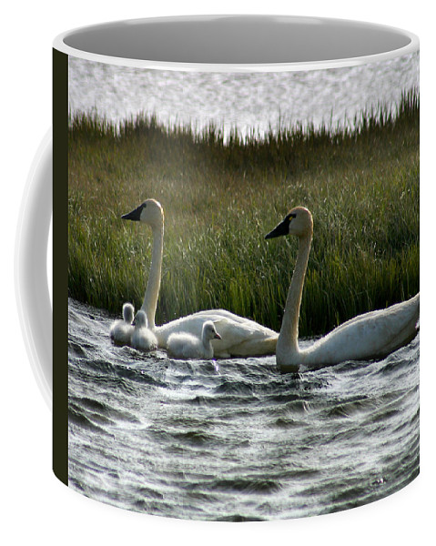 Swans Coffee Mug featuring the photograph Tundra Swans And Cygents by Anthony Jones