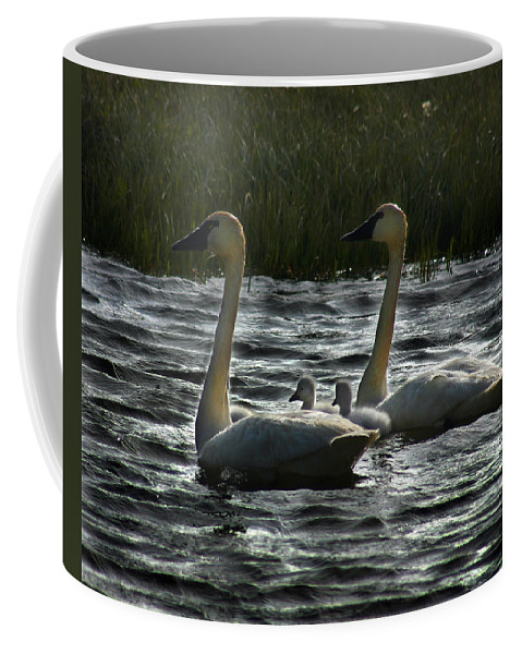 Tundra Swans Coffee Mug featuring the photograph Tundra Swans by Anthony Jones