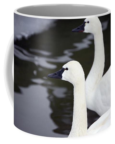 Swans Coffee Mug featuring the photograph Tundra Swans by Lisa Kane