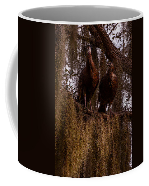 Turkeys Coffee Mug featuring the photograph Turkey Guys by Zina Stromberg