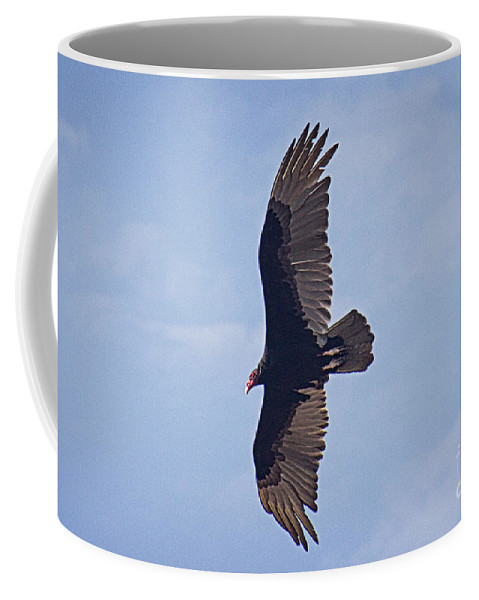 Turkey Vulture Coffee Mug featuring the photograph Turkey Vulture by Bob Hislop
