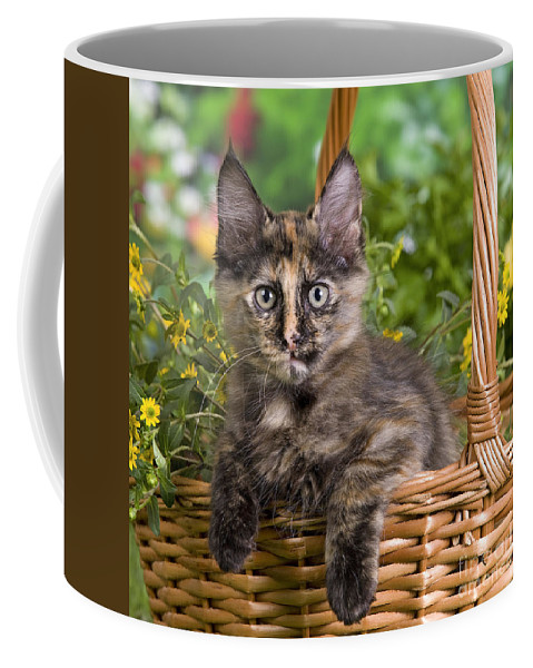 0c2254462a Cat Coffee Mug featuring the photograph Turkish Angora Kitten by Jean-Michel  Labat