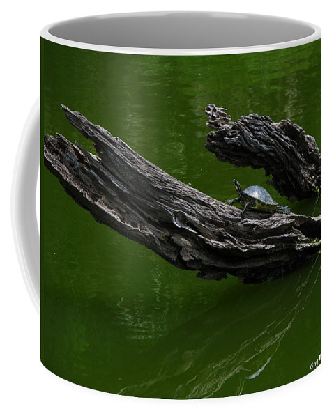 Art For The Wall...patzer Photography Coffee Mug featuring the photograph Turtle Art by Greg Patzer