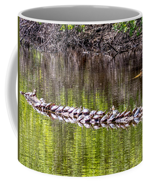 Spring Coffee Mug featuring the photograph Turtle Log by Richard Chasin