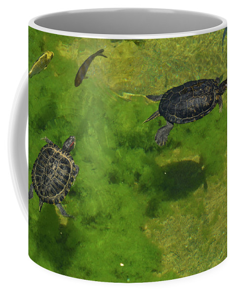 Turtle Coffee Mug featuring the photograph Turtle Pond by Miranda Strapason