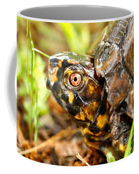 Turtle Coffee Mug featuring the photograph Turtle by Shirley Sykes Bracken