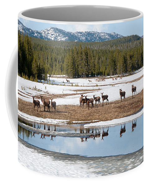 Elk Coffee Mug featuring the photograph Twice The Elk by Steve Stuller