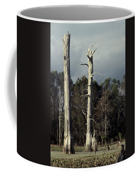 Dead Trees Coffee Mug featuring the photograph Twin Cypress by Herman Robert