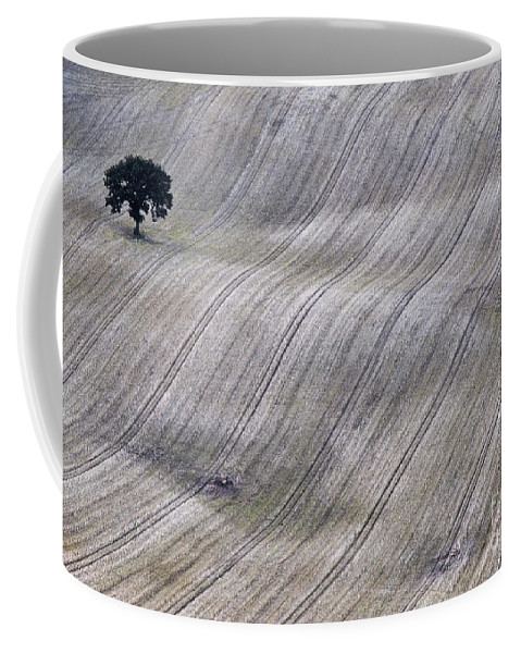Countryside Coffee Mug featuring the photograph Twins Apart by Heiko Koehrer-Wagner