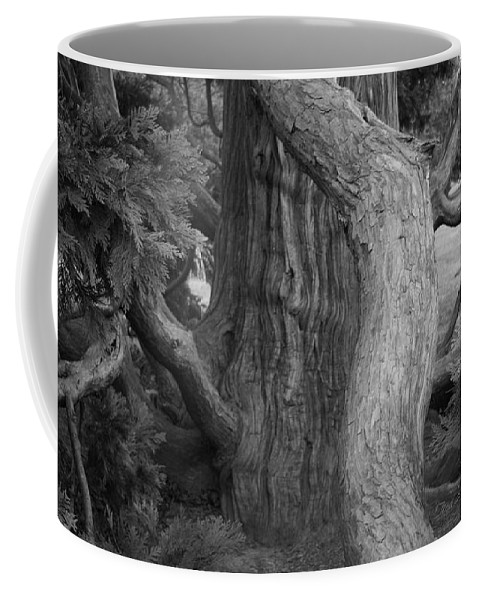 Tree Coffee Mug featuring the photograph Twisted Old Tree by Tina Meador