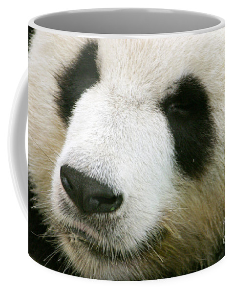 Ailuropoda Coffee Mug featuring the photograph Two Black Eyes by Alan Look