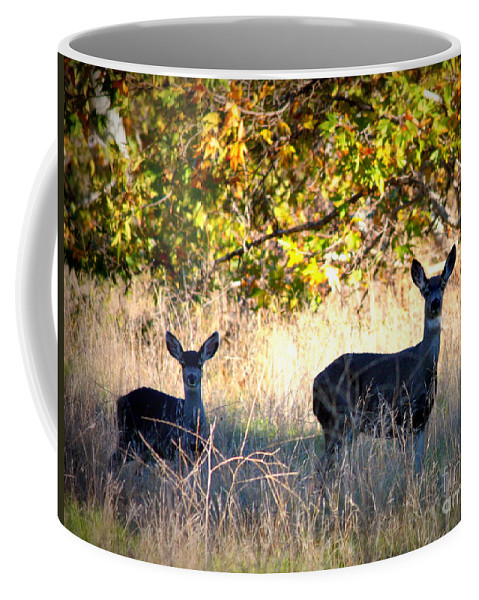 Animal Coffee Mug featuring the photograph Two Deer In Autumn Meadow by Carol Groenen