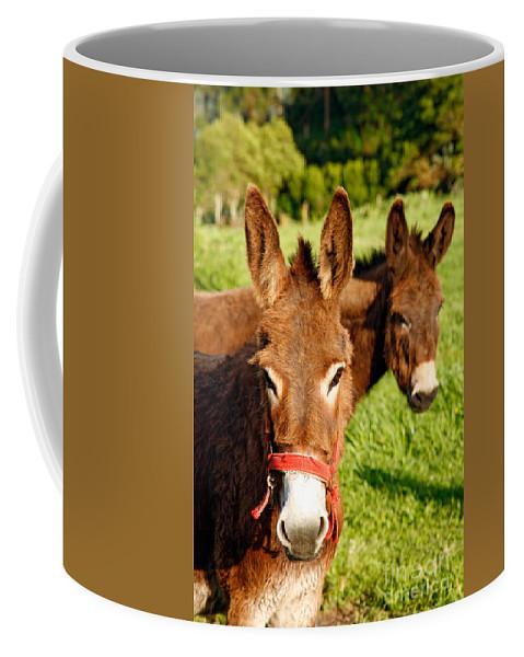 Animals Coffee Mug featuring the photograph Two Donkeys by Gaspar Avila