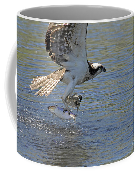 Fish Coffee Mug featuring the photograph Two Fish by Alana Ranney