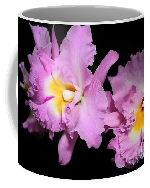 Orchid Coffee Mug featuring the photograph Two Frilly Orchids by Sabrina L Ryan