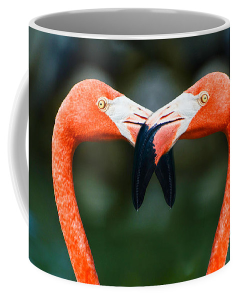 Flamingos Coffee Mug featuring the photograph Two Heads Are Better Than One by Judy Wolinsky