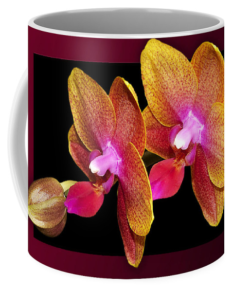 Orchids Coffee Mug featuring the photograph Two Orchids And A Bud by Phyllis Denton