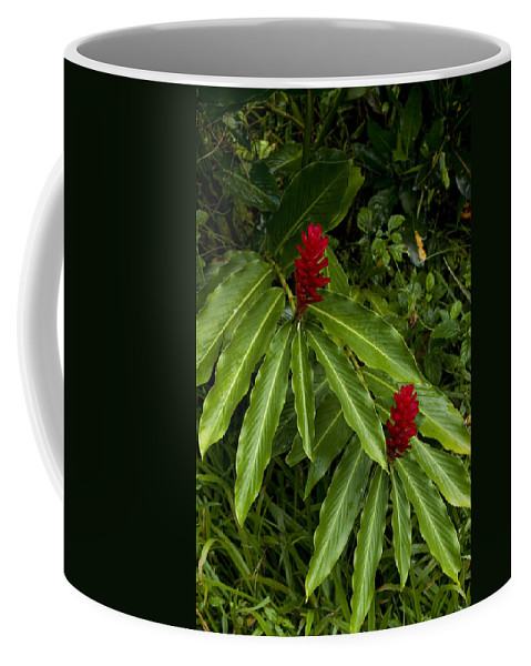 Roseau Coffee Mug featuring the photograph Two Red Tropical Flowers Blooming by Todd Gipstein