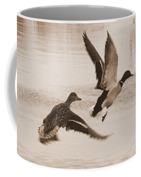Ducks Coffee Mug featuring the photograph Two Winter Ducks In Flight by Carol Groenen