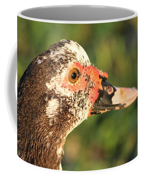 Duck Coffee Mug featuring the photograph Ugly Duck by Lauri Novak