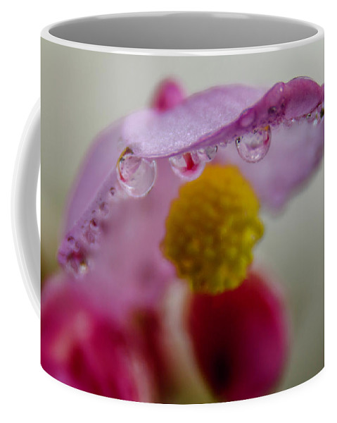 Plant Coffee Mug featuring the photograph Umbrella Blossom by Wolfgang Stocker
