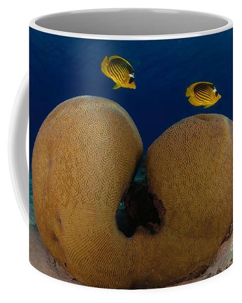 Diagonal Coffee Mug featuring the photograph Under The Sea by Hagai Nativ