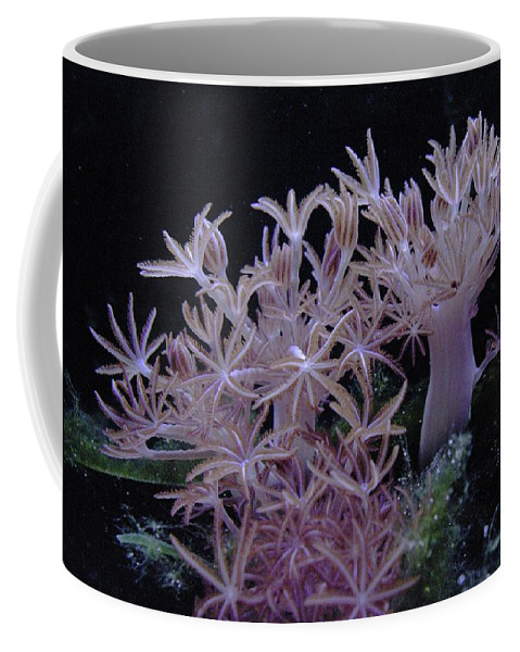 Sea Plant Life Coffee Mug featuring the photograph Under Water by Jeff Swan