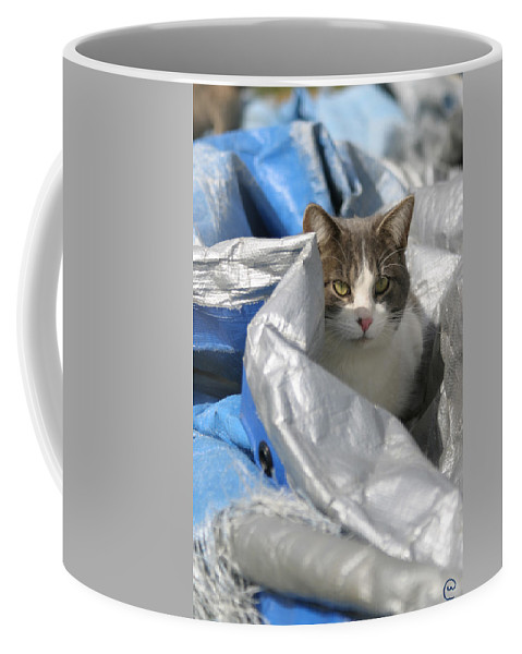 Cats Coffee Mug featuring the photograph Undercover by Bjorn Sjogren