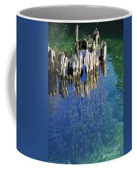 Tree Stump Coffee Mug featuring the photograph Underwater Cypress Stump by Carol Groenen