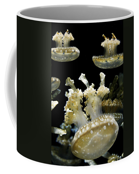 Animal Coffee Mug featuring the photograph Underwater Life by Marilyn Hunt