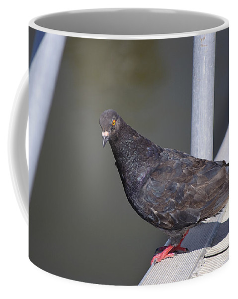 Pigeon Coffee Mug featuring the photograph Unimpressed by Kenneth Albin