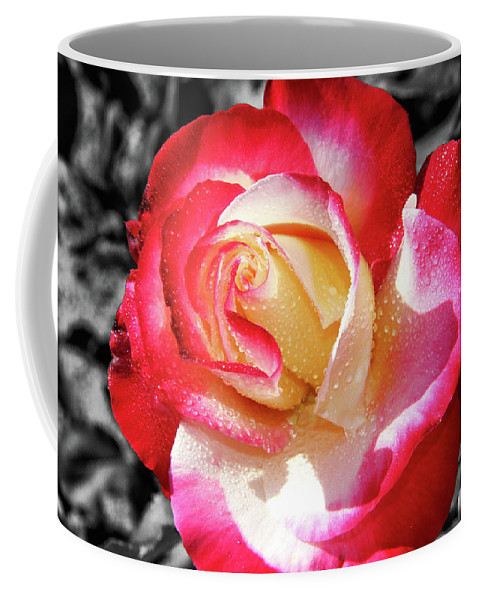 Unity Rose Coffee Mug featuring the photograph Unity Rose by Mariola Bitner
