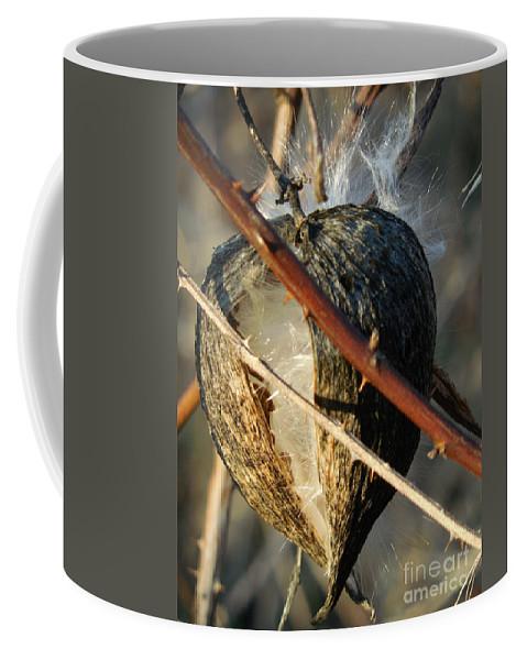 Botanical Coffee Mug featuring the photograph Unspent Milkweed by Rowena Throckmorton