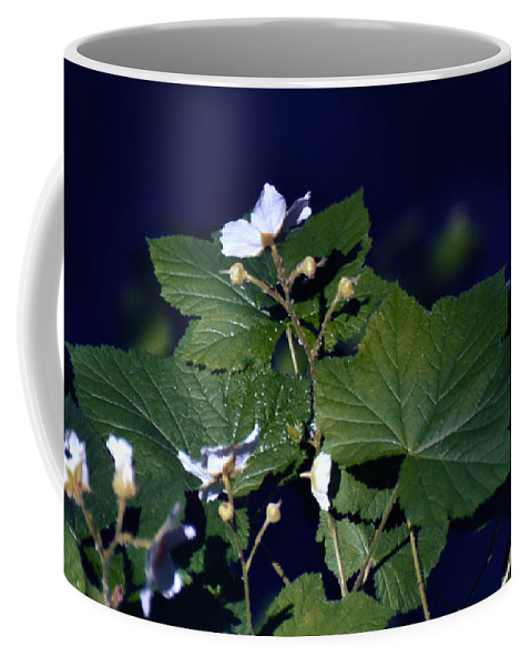 Leaves Coffee Mug featuring the photograph Untitled 01 by Peter Piatt