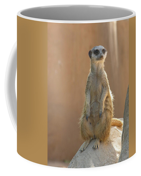 Animails Coffee Mug featuring the photograph Untitled by Diane Greco-Lesser