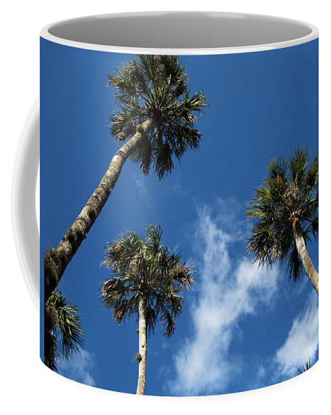 Photography Coffee Mug featuring the photograph Up To The Sky Palms by Susanne Van Hulst