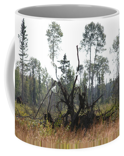 Roots Tree Stump Hawk Bird Wild Forest Nature Feeling Abstract Coffee Mug featuring the photograph Uprooted by Andrea Lawrence