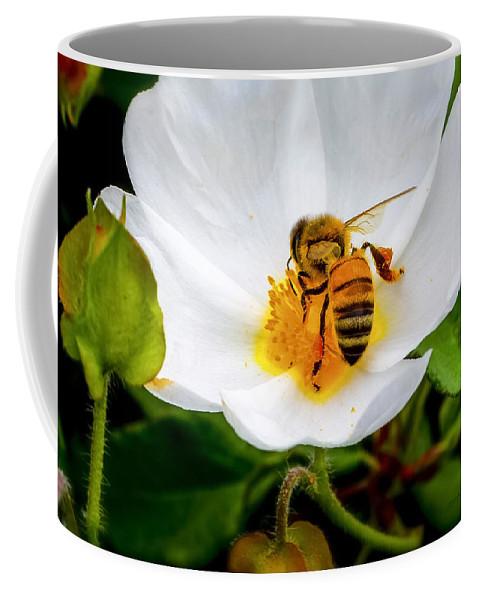 Honey Bee Coffee Mug featuring the photograph Vacaville Honey Bee by Brian Tada