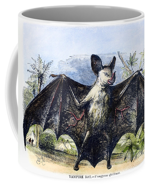 19th Century Coffee Mug featuring the photograph Vampire Bat by Granger