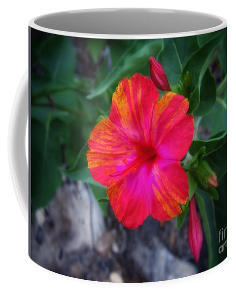Flower Coffee Mug featuring the photograph Variegated 4 O'clock by John Myers