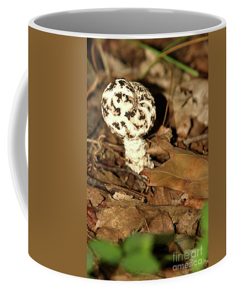 Vacation Coffee Mug featuring the photograph Varigated Mushroom by Alan Look