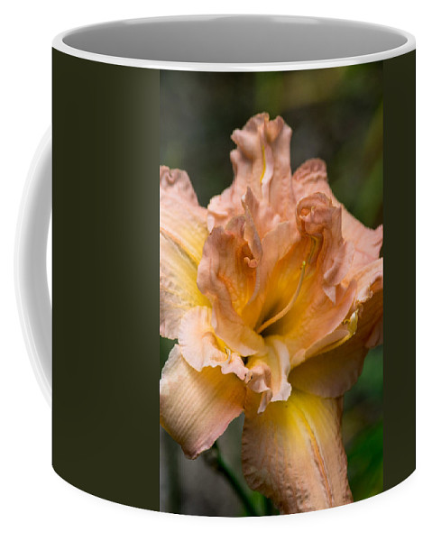 Lily Coffee Mug featuring the photograph Veiled Mother Of Ivory Iris by Douglas Barnett