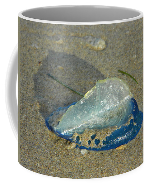 Velella Coffee Mug featuring the photograph Velella With Shadow by Gallery Of Hope