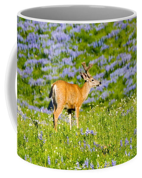 Deer Coffee Mug featuring the photograph Velvet On Lupine by Mike Dawson