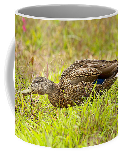 Duck Coffee Mug featuring the photograph Vermont Mallard Portrait by Deborah Benoit